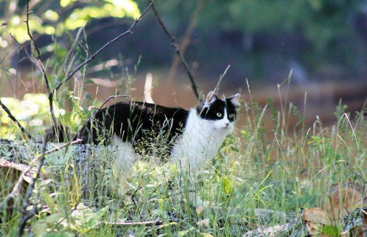 Phishy Cat