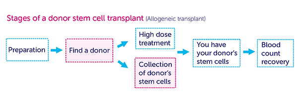 Stages of a donor stem cell transplant.p
