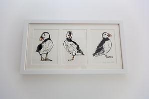 puffins-2720.jpg