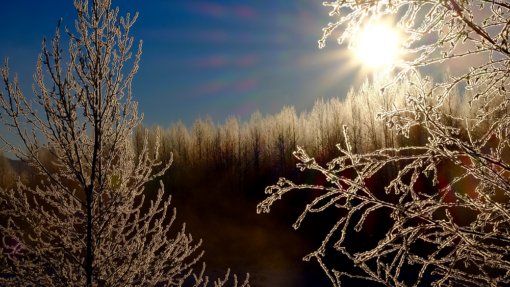 A photo of a frosty forest, with the sunshine peeking through in a blue sky