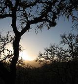 sundown-tree.jpg