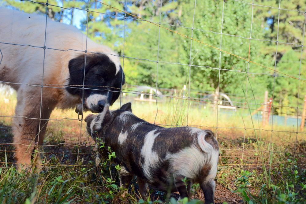 Corva Bella Farm Tour