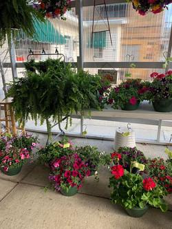 Mixed Garden Pots