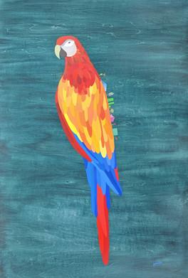 macaw.b98a760a.jpg