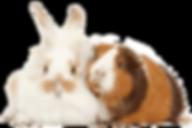 24 Hour Pet Sitters