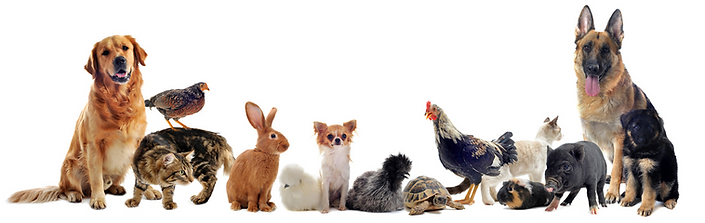 pets-banner.png