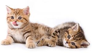 cute-kittens.jpg