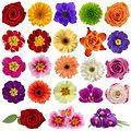 flower varieties.jpg.7de9d680.jpg