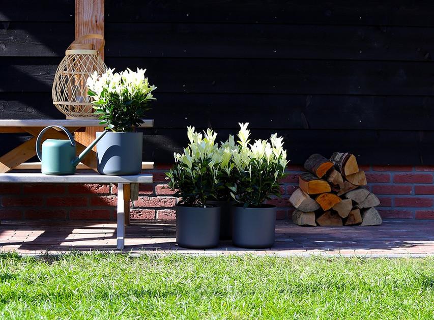 fotografie productfotografie planten - K