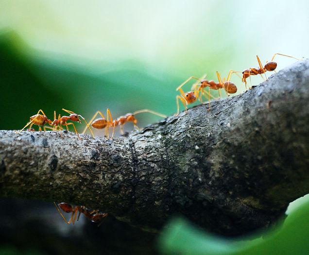 6. mieren vangen en verwijderen - Zuid W