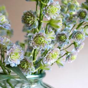 Floralí Licensing B.V.
