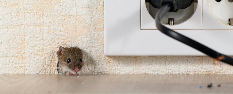 9b. muis ratten vangen en verjagen - Zui