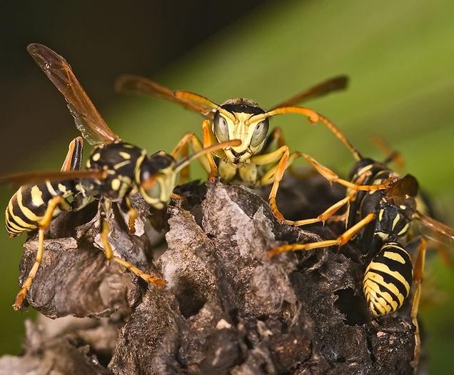 2. wespen verplaatsen verwijderen - Zuid