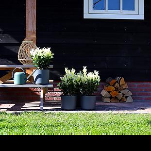 23. Productfotografie planten telers - f