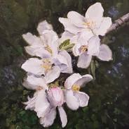 Calton Hill Blossom.