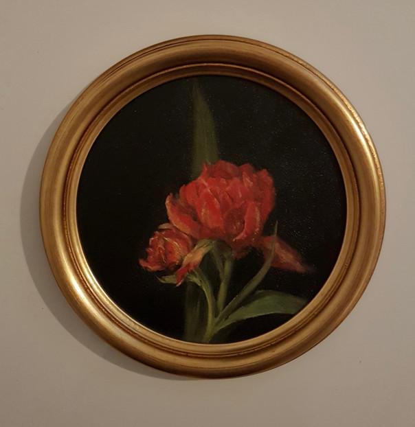 Yard Red Tulip.