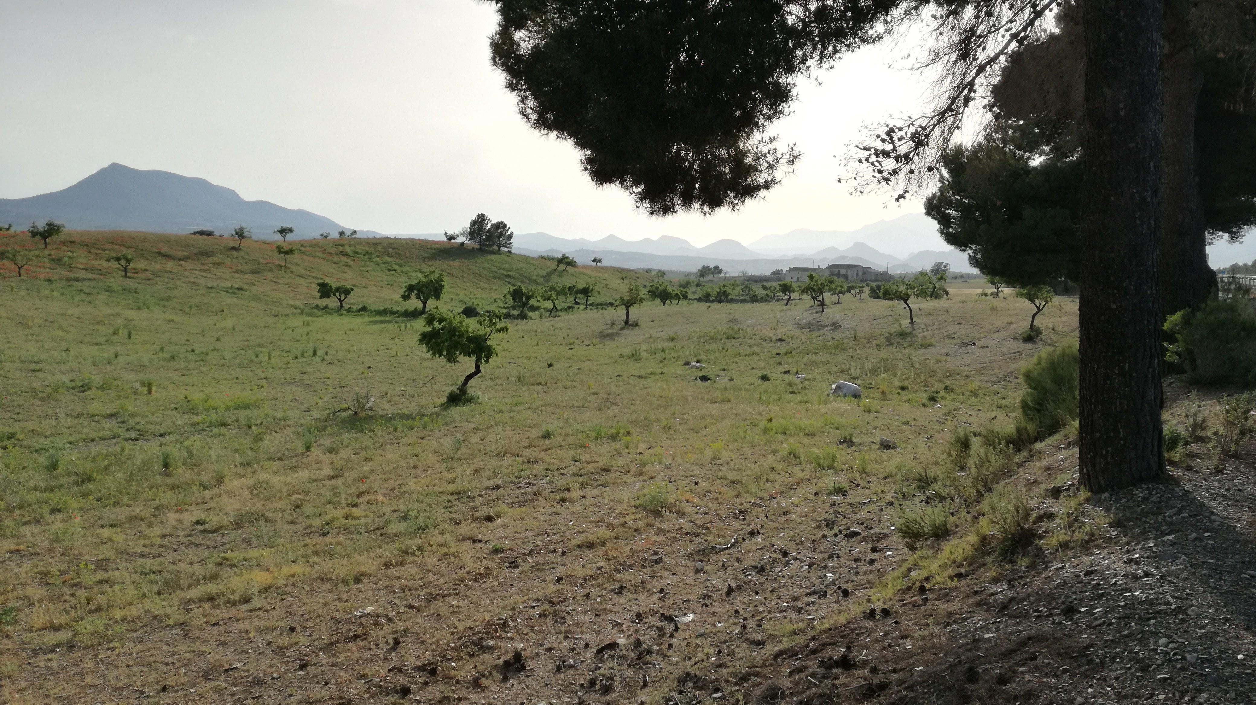 Local Scenery