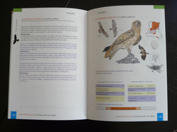 Guide book on the birds of Los Vélez