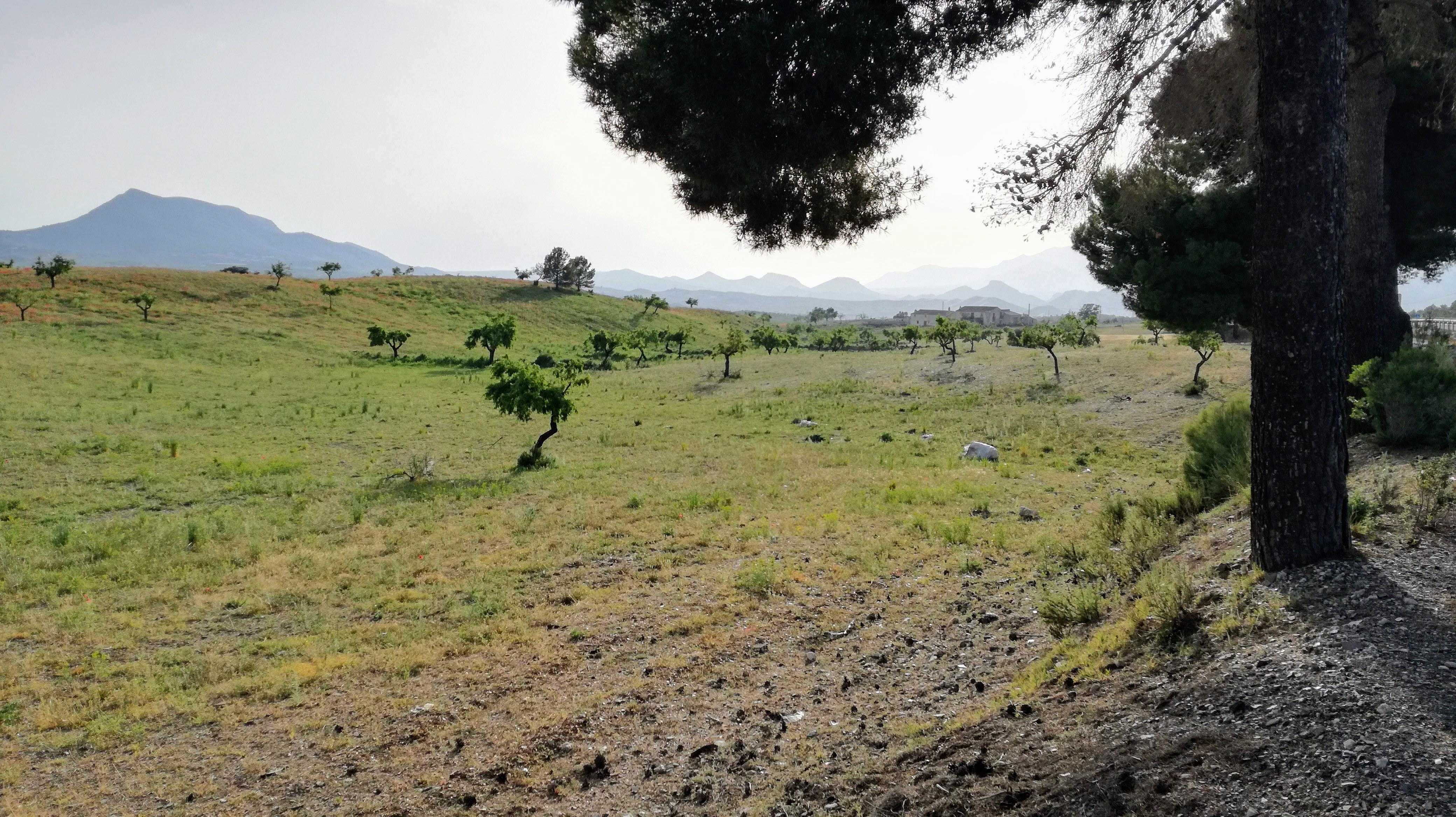 Paisaje Local