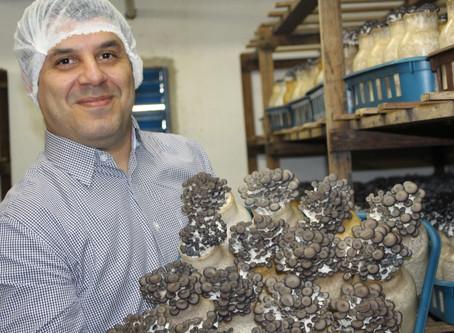 Eu e minha paixão pelos cogumelos
