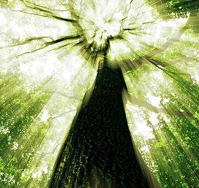 arbre-vert.jpg