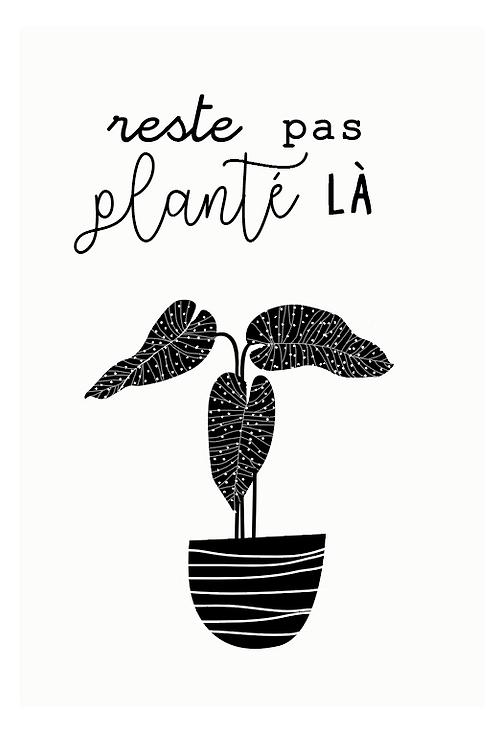 """Carte à planter """" Reste pas planter là"""""""