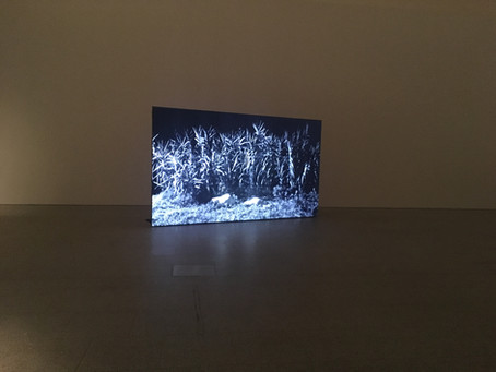 """Cinematography for André Romão's ART Film """"SUNRISE"""" AT MUSEU BERARDO CCB"""