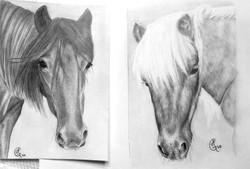 Ponies Portrait