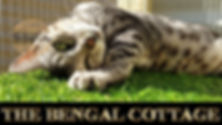 Bengal Cover Photo for Website.jpg