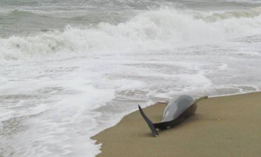 dolphins-death.jpg.860x0_q70_crop-smart