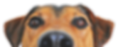Peeking dog.png