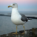 Canva - Seagull, Sea __Bird, Bird, Sea,