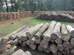 Holz über Holz!