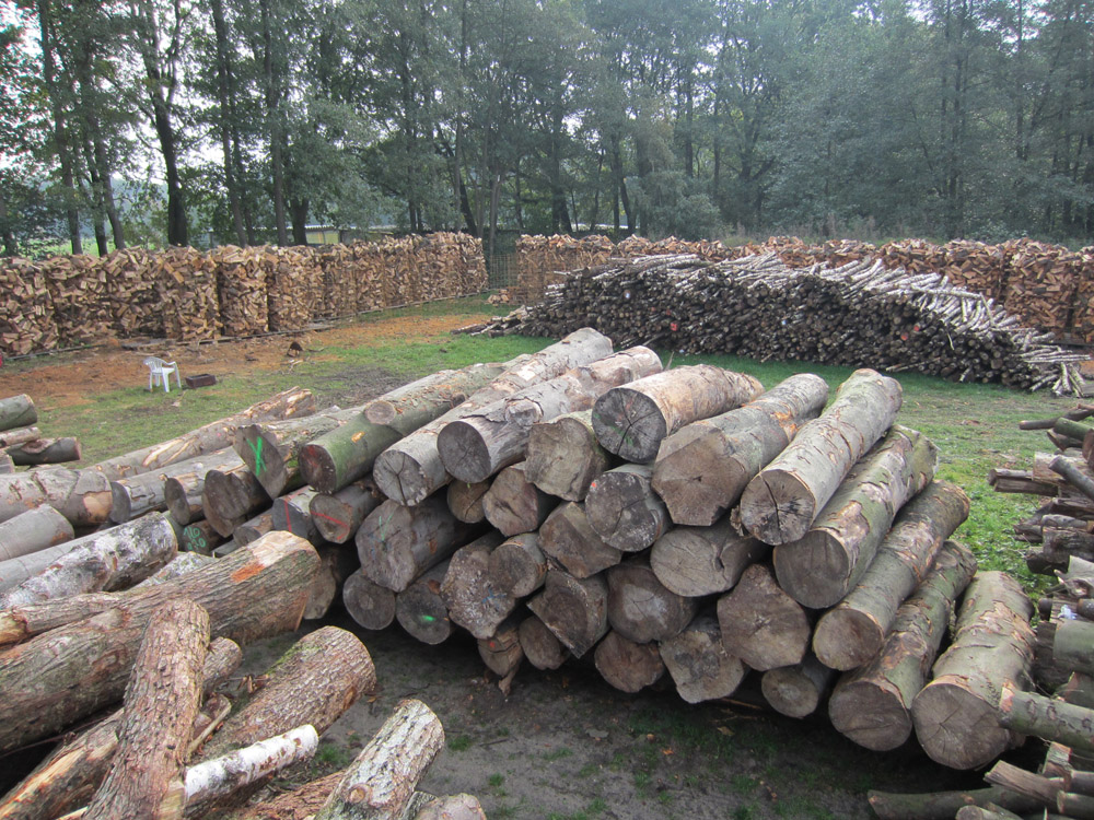 Holz wohin man schaut!