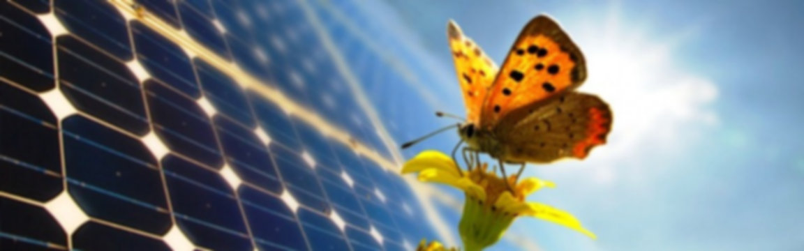 cropped-butterfly-solar-panel4.jpg