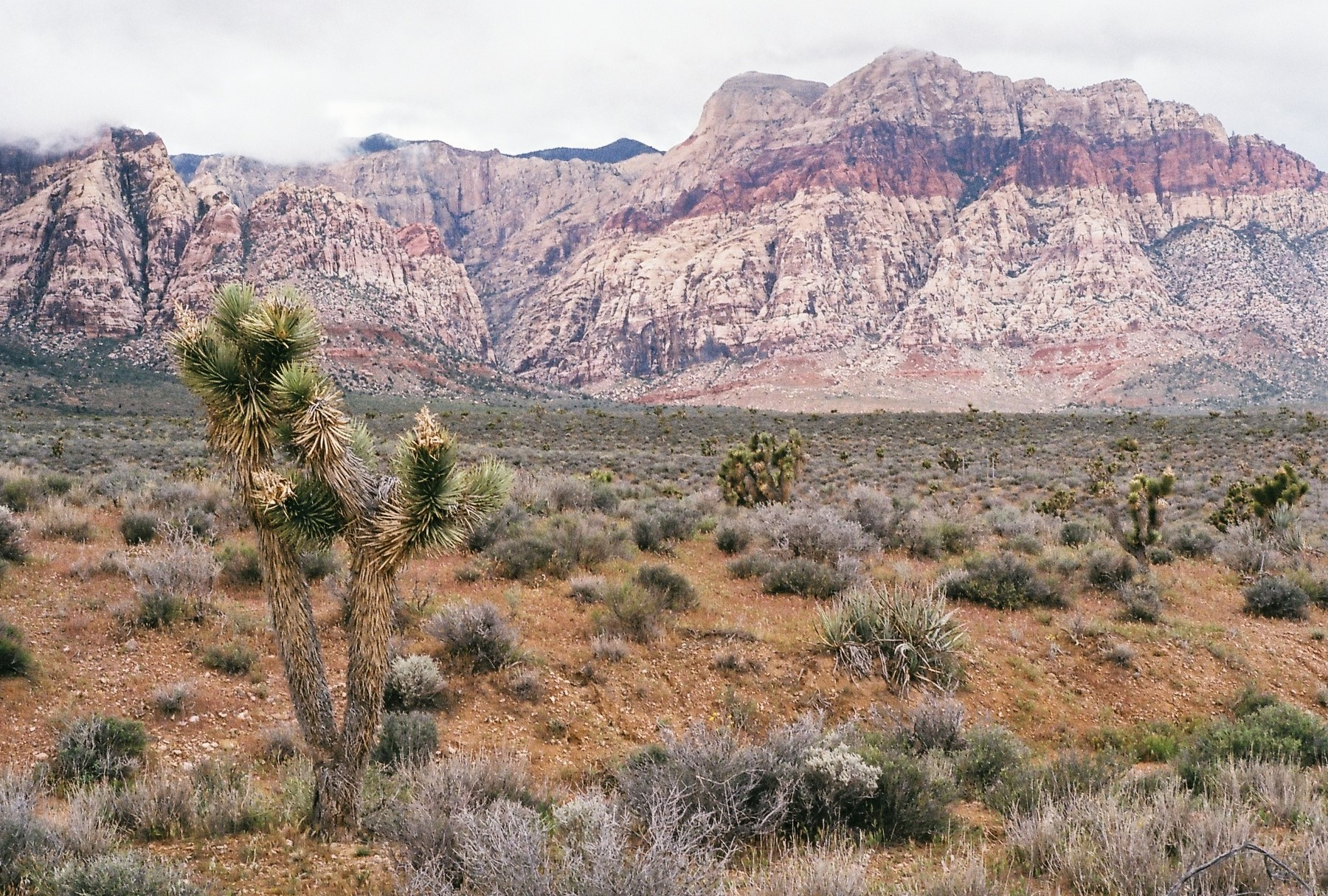 RED ROCK, NV