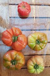 TomatoPhoto.jpg