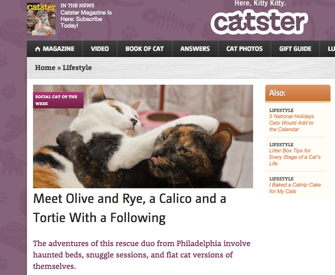 Our Interview with Catster