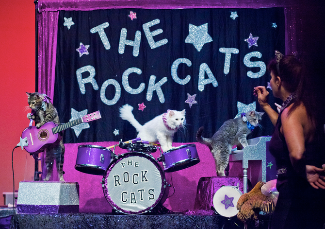 Acrocats Come to Philly