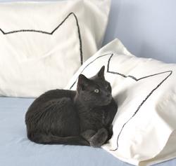 xenotees cat pillowcases