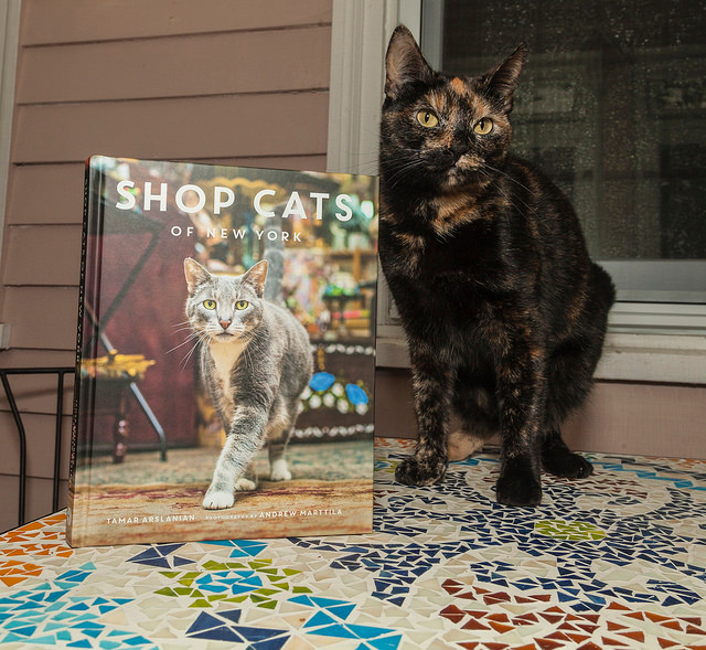 Rye with the new book Shop Cats of New York