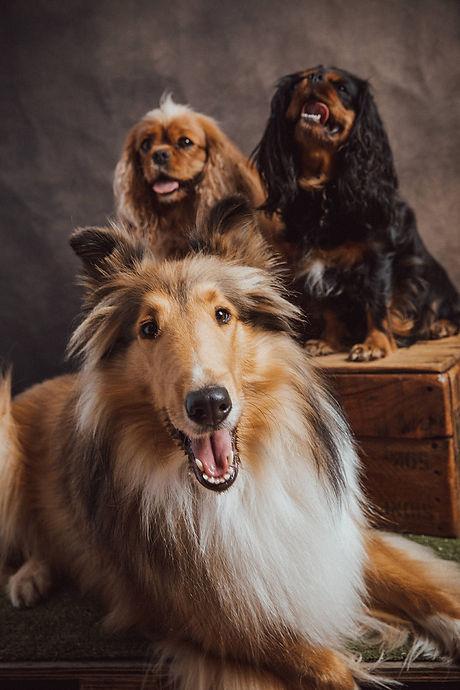 Lassie, Ladybel, Tinkerbel Christmas Por