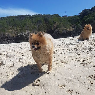 Chester_Chanel_beach.jpg