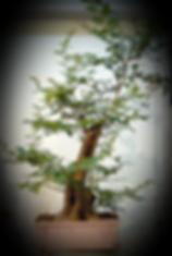 Screen Shot 2019-08-31 at 10_edited_edit