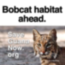 7-Bobcat-Proof.jpg