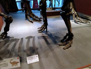 自然博物館と脚の骨