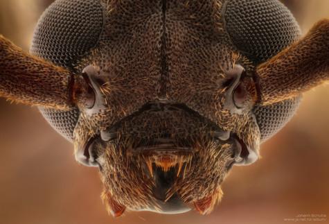 Beetle by Johann Schutte