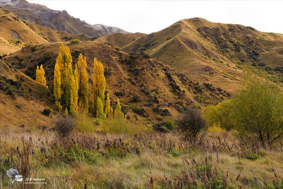 Autumn Colours Cardrona Valley