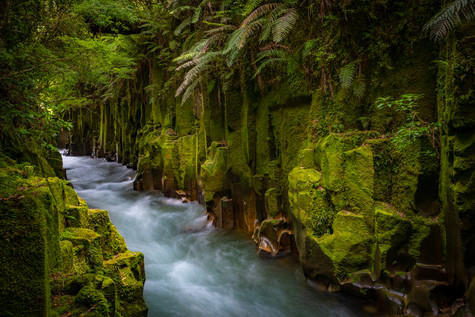 Whirinaki Forest Flow by Meghan Maloney