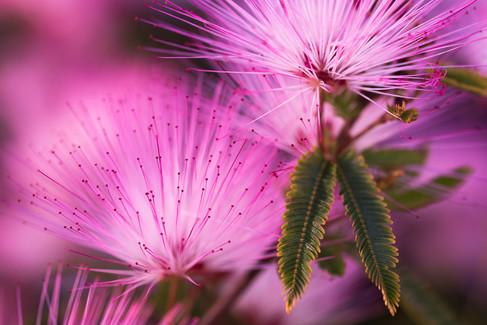 Pink by Graham Jones